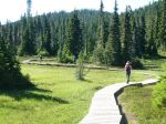 Paradise Meadows boardwalk