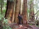 in the ancient cedar grove