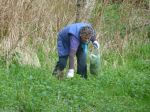 Collecting Nettles