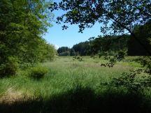 Vic's Marsh