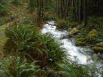 Deepwater Creek